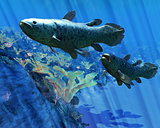 Coelacanth Fish