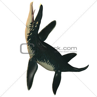 Liopleurodon on White