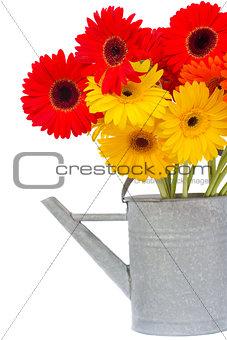 bouquet of gerbera flowers in watering can
