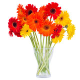 gerbera flowers in vase