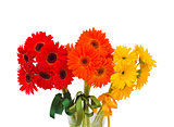 gerbera flowers bouquet close up