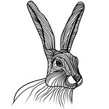 Rabbit or hare head vector illustration