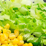 corn and lettuce