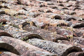 Old tile roof close up