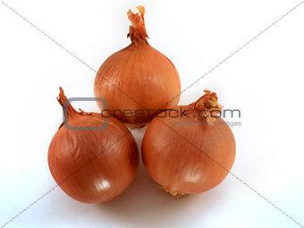 Fresh bulbs of orange