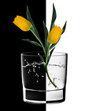 Yellow Tulips and Water glass