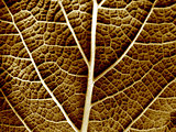 Dry leaf of a plant close up