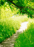 Trail in a Sunny Green Summer Forest