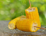 corn boiled