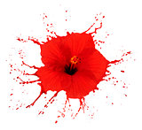 red hibiscus with splashes