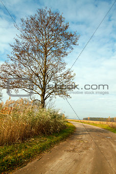 Autumn landscape with a road and tree