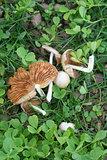 fungus in garden