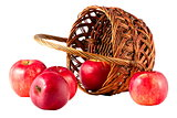sweet red fruit ripe apples in the basket