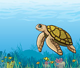 Cartoon sea turtle and coral reef.