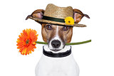 flower dog with hat