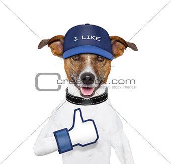 i like dog