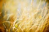 field blur