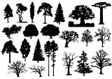 trees silhouette 002