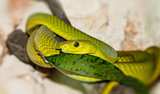 Green snake in a forest