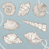 Set of vector seashells.