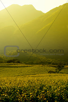 Beautiful vineyard landscape in Provence