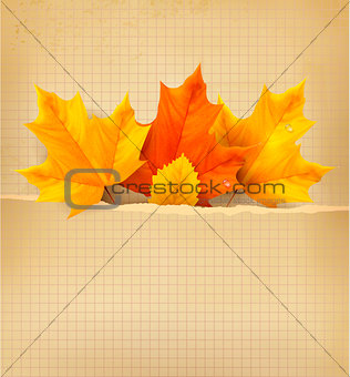Autumn background with leaves. Back to school. Vector illustrati