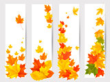Set of autumn banners with colorful leaves. Back to school. Vect