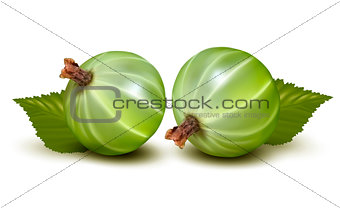 Green gooseberries with leaves. Vector