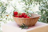 Basket of red tomatoes with olive tree branch on background