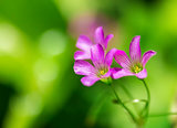 Delicate Purple Wildflowers