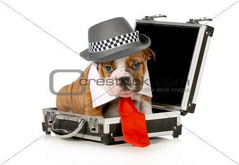 business puppy