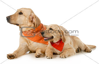 adult dog and puppy