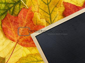 blackboard on autumn leaves
