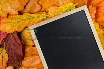 blackboard on autumn leaves
