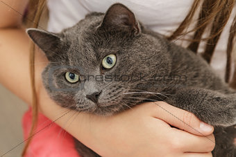 british shorthair cat in girls hands