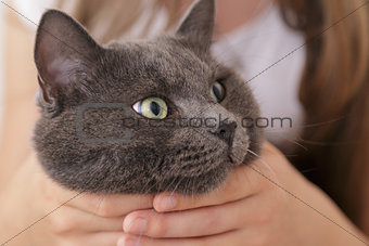british shorthair cat in girls hands
