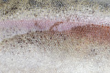 texture of trout scale