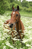 Beautiful mare with bridle