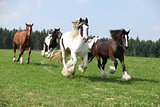 Batch of irish cobs running