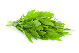 Bunch of fresh Ruccola  leaves /  rocket salad  /  isolated on w