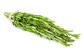 Bunch of fresh Rosemary  /  isolated on white