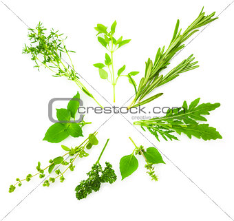 Circle Border of Different  Fresh Spice Herbs /  isolated on whi