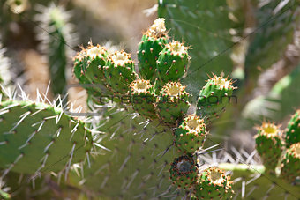 Bush green prickly cactus with spider web