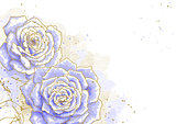 Blue roses on white background