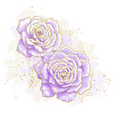 Violet roses on white background