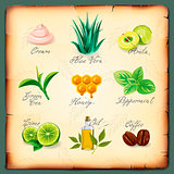 Set of natural cosmetics ingredients, vector Eps10 image.