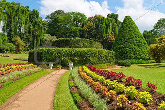 Beautiful tropical botanical garden