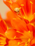 Little snail on red crocus flower