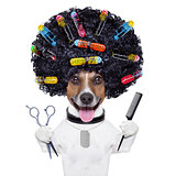 hairdresser   dog with curlers