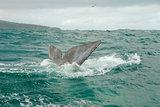 Whales' Fluke
